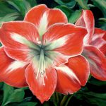 Red Flower Oil Canvas This Was Painted From Graph