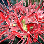 Spider Lilies Red Flowers Painting Large Botanical Closeup Portrait