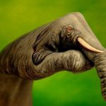 Unbelievable Creative Art Hand Paintings Animal