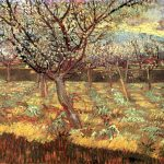 Vincent Van Gogh Paintings Apricot Trees Blossom
