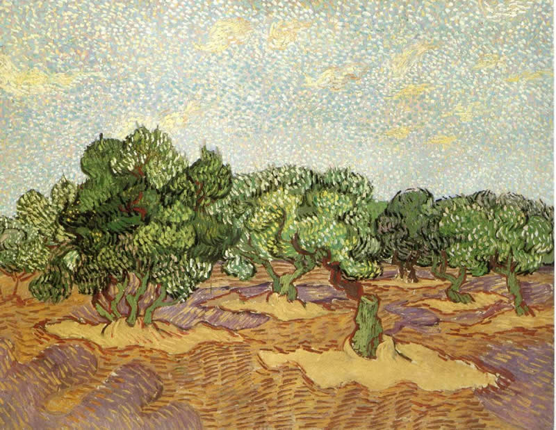 Vincent Van Gogh Paintings Olive Grove Painting