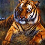 Animals Oil Painting Code Ycj