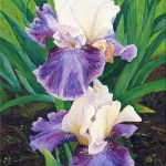 Audra Oil Paintings Irises