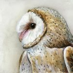 Barn Owl Watercolor Painting Olga