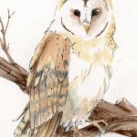 Barn Owl Watercolor Painting Wildlife Art