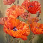 Best Poppies Klaprozen Pinterest Beautiful Flowers