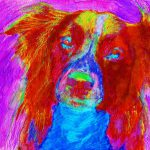 Border Collie Abstract Painting Print Dog