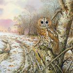 Carl Donner Tawny Owl Painting Print