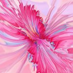 Carnation Pink Digital Art Anastasiya