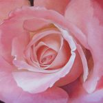 Close Painting Pink Rose Alena