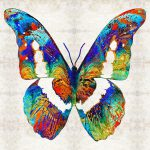 Colorful Butterfly Art Sharon Cummings