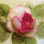 Eden Rose Pink Painting Pierre Ronsard Watercolor