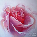 English Rose Painting Sandra Phryce