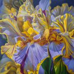 Floralscape Mauve Yellow Irises Painting Fiona