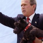 Former First Dog Barney Dies Bush Honors Oil Painting Cbs