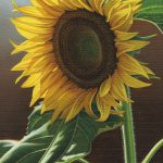 Giant Sunflower Painting Steven