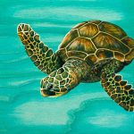 Hilahila Shy Sea Turtle Painting Emily