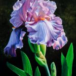 Iris Flower Art Print Floral Painting