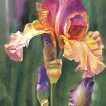 Iris Warm Side Sharon