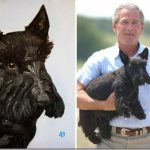 Jeb Bush Says Brother Taken Painting Dogs Vengeance