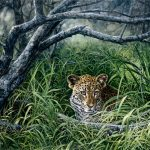 Johan Hoekstra Wildlife Art Collection Very