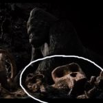 Kong Skull Island Connected King Any Its Other Versions