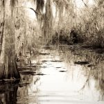 Louisiana Swamps Photograph Sally