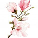 Magnolia Watercolor Painting Mongolia