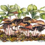 Mushroom Forest Painting Terry