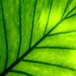 Natural Green Leaves
