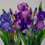 Nel Everyday Painting Irises Watercolor