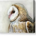 Owl Paintings Canvas Prints