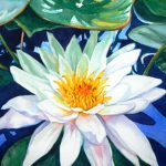 Paint Water Lily Watercolor