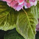 Painting Realistic Leaves Mixing