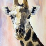 Pam Quinlan Giraffe Portrait Not Available Lonehill