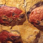 Prehistoric Murals Altamira Revealed Lucky Few Cnn