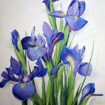 Purple Iris Alicia Yvonne Pecor