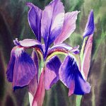 Purple Iris Painting Irina