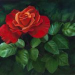 Red Rose Oil Painting Canvas Elena
