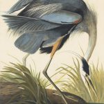Selected Bibliography Audubon Aviary Complete
