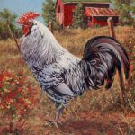 Silver Laced Rock Rooster Richard