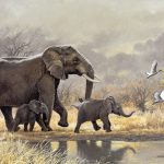 South African Wildlife Johan Hoekstra Art