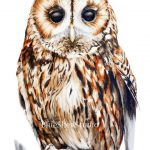 Tawny Owl Large Fine Art Print Watercolor