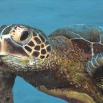 Turtle Painting Under Sea Angelo Grisafi