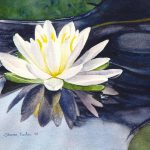 Water Lily Painting Sharon