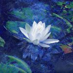 Water Lily Photograph Ann
