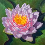 Water Lily Study Painting Fiona