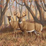 Whitetail Deer Painting Fall Flame Crista