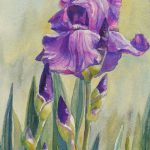 Zeh Original Art Blog Watercolor Oil S Purple Iris