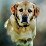 Dog Paintings Painted Pet
